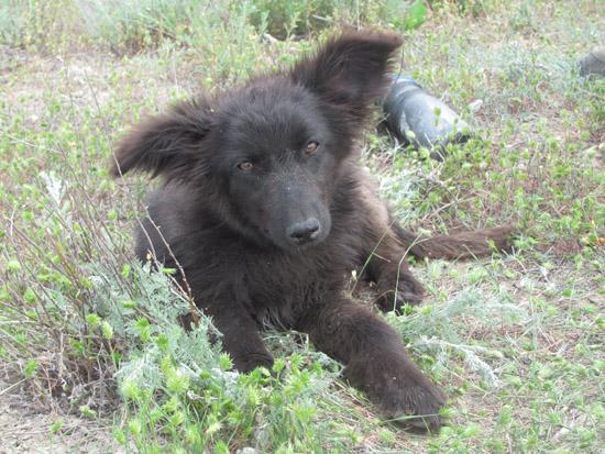 hund2img_0600.jpg